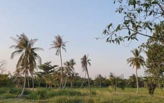 Bang Kachao - lush vegetation and palm trees