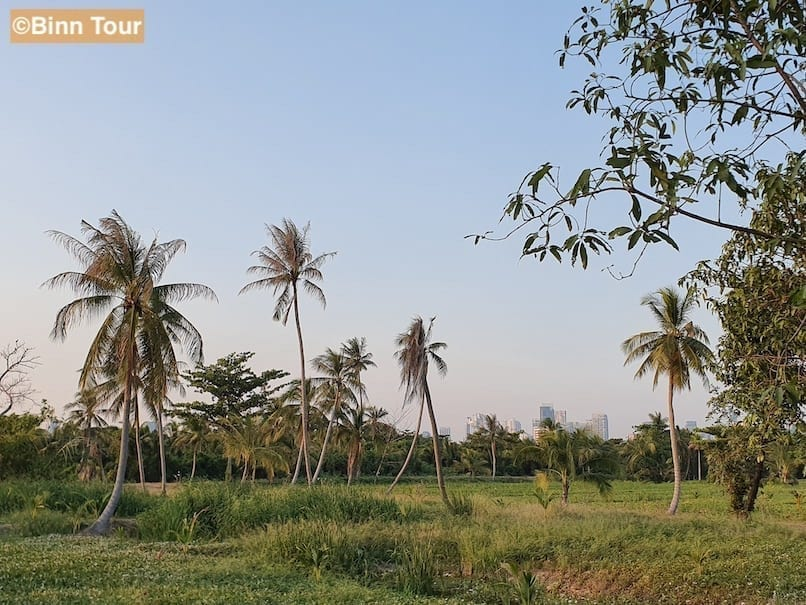 Typical scenery in Bang Kachao: lush vegetation and palm trees